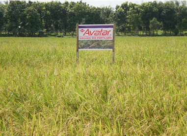 ABM Trichoderma Marketed as Avator in the Philippines